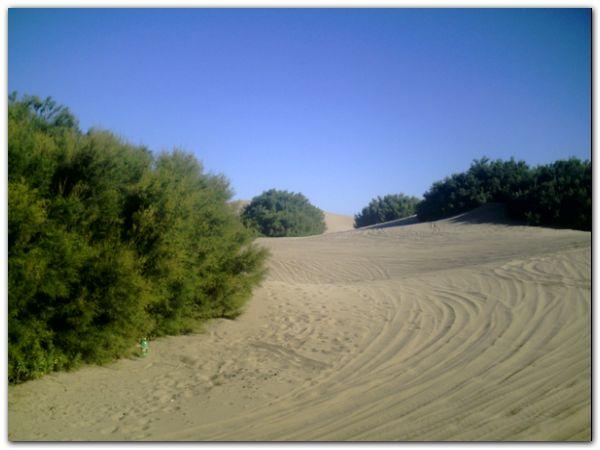 playa-medanos-01-02-09-ahorainfo-002