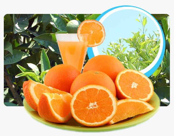 naranjas-mamdarinas
