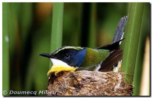 aves-sietecolores