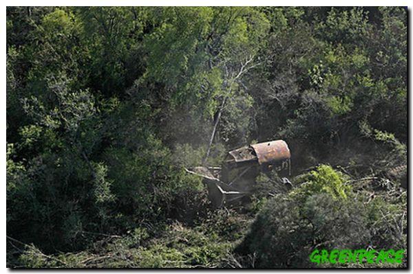 chaco-activistas-de-greenpeac-10