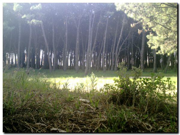 parque-lillo-07-11-09-ahorainfo 0020